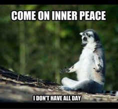 15 Funny Fitness Memes: Weight loss routines or any fitness regime can get boring, but don't give up yet. Get motivated and laugh yourself to the gym with these insanely funny memes. Funny Animal Pictures, Funny Animals, Hilarious Pictures, Funny Photos, Jokes Photos, Funny Owls, Funny Animal Memes, Funny Cute, The Funny