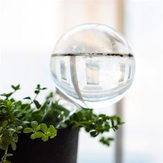 Selvvanningsglass OLIVIA | Lagerhaus