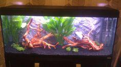 aquarium wood background - Google Search Goldfish Aquarium, Aquascaping, Wood Background, Aquariums, Google Search, Tanked Aquariums, Fish Tanks, Fish Tank