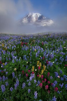 Rainier, the highest mountain in Washington and the Cascade Range of the northwestern United States ['Foggy Paradise, Mt. by Ron Coscorrosa, via Beautiful World, Beautiful Places, Beautiful Pictures, Hello Beautiful, All Nature, Amazing Nature, Beautiful Landscapes, Wonders Of The World, Mother Nature