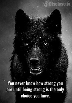 wolf lyfe | strong