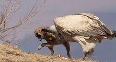 Thrilling wildlife sightings to inspire a trip in 2019 - Wild Card Wild Park, In 2019, Camel, Lion Sculpture, Wildlife, Owl, African, Statue, Bird