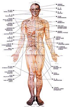 Acupuncture points, anterior.                                                                                                                                                                                 More