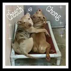 SAFE!!! Cheech got pulled by Friends and Chong went to foster care with him. Yay! Bonded puppies at Mississippi shelter begging to be rescued together https://www.facebook.com/photo.php?fbid=10205326505497334&set=a.1660983039636.2078037.1088971523&type=1
