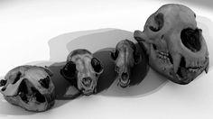 skany 3D interaktywne muzeum Skull, Minnesota, Studio, Art, Lab, Art Background, Kunst, Studios, Performing Arts