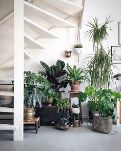 Plants purify air for us. Decorating living room with Indoor plants makes us feel more comfortable and relaxed. Indoor plants are those that can live with minimal or no sunlight. Here are some of the ways to decorate indoor plant in living rooms. Plantas Indoor, Jungle Decorations, Decoration Plante, Deco Nature, Plants Are Friends, Interior Plants, Under Stairs, Green Life, Plant Decor