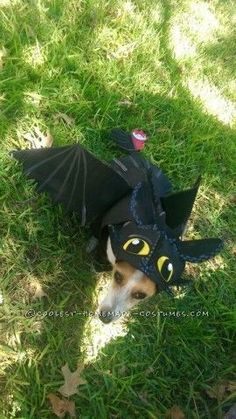 Awesome DIY How to Train Your Dragon Dog costume Cute Dog Halloween Costumes, Diy Dog Costumes, Costume Ideas, Halloween Ideas, Dog Dragon Costume, My Champion, Warrior Cats, How Train Your Dragon, Dog Training
