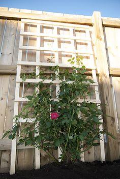 Make a DIY trellis for your garden for only $6.