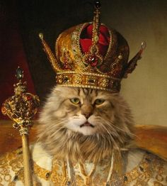 О коте-короле