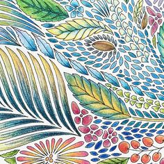 125 Best Animal Kingdom Coloring Book Images Coloring Books