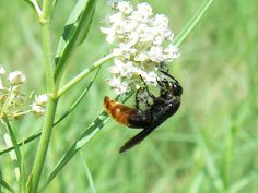 Bee by USFWS Headquarters, via Flickr