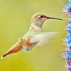 Top 8 Reasons to Make Your Own Hummingbird Nectar: Adjusting the Concentration