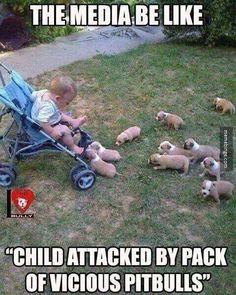 vicious pitbulls