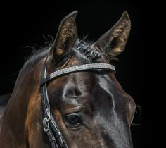 Contact Verification Suspension Page Horses, Lifestyle, Animals, Violin, Animales, Animaux, Animais, Horse, Words