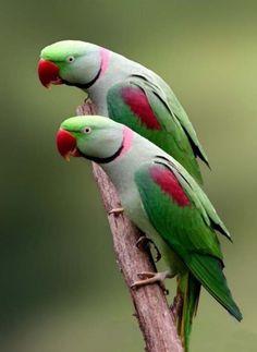Birds - Animal Twins Photography