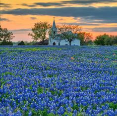 East Central Texas bluebonnets ~ Beautiful country church at sunset Old Country Churches, Old Churches, Beautiful World, Beautiful Places, Take Me To Church, Texas Bluebonnets, Blue Bonnets, Kirchen, Landscape Photos