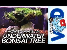 """In this video, we show you how to build your own, custom underwater """"bonsai"""" tree! Now this is a FUN addition to any aquarium. Big Aquarium, Flourish, Underwater, Make It Yourself, Youtube, Under The Water, Youtubers, Youtube Movies"""