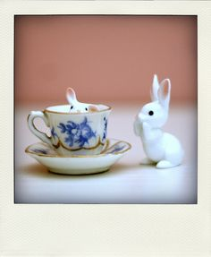 Find images and videos about cute, white and kawaii on We Heart It - the app to get lost in what you love. Lapin Art, Somebunny Loves You, Cherry Blossom Girl, Bunny Art, Bunny Bunny, Bunny Rabbits, Baby Bunnies, Tiny World, Kawaii