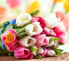 Beautiful Pink and White Tulip Flower Bouquet HD Picture