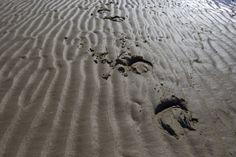 Hoof prints Laytown Photo Patrick McCann 03.09.2013.  #sea #sand #horseracing #Ireland #unique