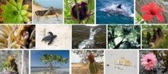 Ensayo ¿Por qué los grandes? | Ciencia Puerto Rico