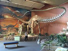 Seismosaurus at the New Mexico Natural History Museum in Albuquerque