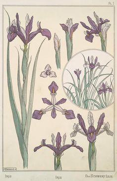 All the art nouveau plant designs Vintage Botanical Prints, Botanical Drawings, Botanical Art, Fleurs Art Nouveau, Art Nouveau Flowers, Design Art Nouveau, Art Design, Iris Drawing, Art Nouveau Tattoo