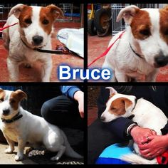 Bruce is off to rescue later in the week :) Good luck, gorgeous boy :) #safeandsound #rescue #rescuedog #dontshopadopt #dog #newlife #happy #love #givesomuch #giveadogachance #somanyneedanewhome #adoption #pet #beautiful #bestfriend #mansbestfriend www.safe-and-sound.org