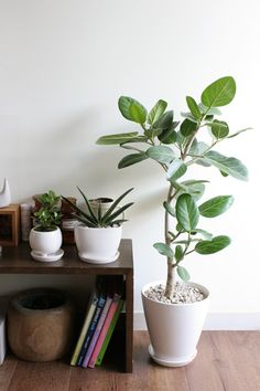 ②大きめな観葉植物や小ぶりのグリーンポットを置いてみる