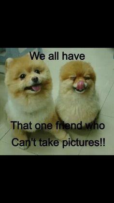 Funny Animals | From Lukey Blu on Google+