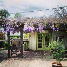Porter Creek Vineyards in Healdsberg, CA -  A tasting shack - I want to go to here!!!