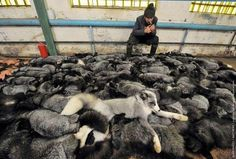 We must stop the fur industry now, the price of fur to animals is too great, look at this misery, for what?