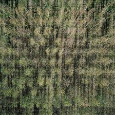 """003 by Gerco de Ruijter, 32"""" x 32"""", from Baumschule (2008-2010)"""