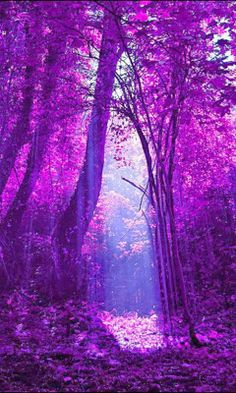 in the purple light.I beheld the sight.a purple dream.with a lavendar stream.another glance.in the purple trance.I saw the dance.of lilac fairies.and I knew I had reached.a wonderland.of bliss Purple Love, All Things Purple, Purple Rain, Shades Of Purple, Purple Stuff, Magenta, Deep Purple, Light Purple, Periwinkle