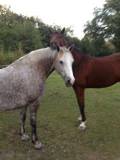 Bella and her best buddy, Mushu