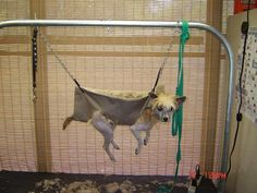 41 Best Dog Grooming Hammock Images Dog Grooming Business Pets