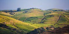 KwaZulu-Natal Kwazulu Natal, Drupal, Season 4, South Africa, Vineyard, River, Outdoor, Outdoors, Vine Yard