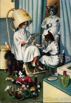 Mainzer Cats at the Beauty Shop