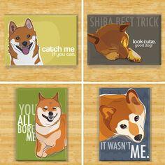 Shiba magnets.