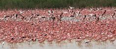 See Flamingos at Kamfers Dam