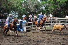 Home of the Paniolo (Hawaiian Cowboys). Parker Ranch was founded in 1847 by John Palmer Parker in Waimea on the Big Island of Hawaii. Kamuela Hawaii, Kohala Coast, Hawaii Life, Living In La, Local Girls, Hawaiian Islands, Big Island, Cowgirls, Kauai