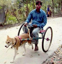 Desi Funny horse ride - Top Desi Funny Pictures that will may laugh Funny Animal Pictures, Dog Pictures, Funny Photos, Funny Images, Funny Animals, Some Funny Jokes, The Funny, Funny Man, Indian Funny