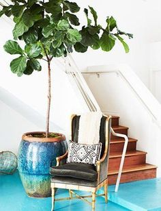os Achados   Décor   Plantas   Ficus Lyrata