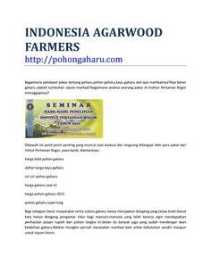 Indonesia agarwood farmers pohongaharu com