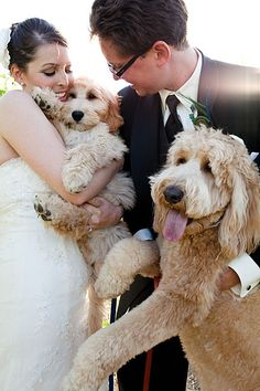 GOLDEN DOODLES!!!!!!@Ben Deaton...i think the breeders lied to us. Pippa looks just like a goldendoodle! haha i love this! @Jena McClendon@Judy Wright