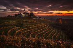 View of the Jeruzalem vineyards in the Ljutomer Ormoz hills in the Prlekija region of Slovenia