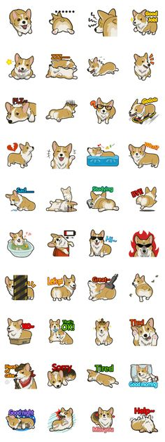 Innocent corgi loves you so~ let the lovely corgi express your deepest emotions.