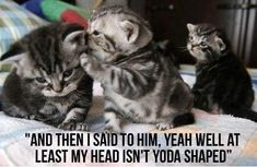 Funny Cat Pictures With Captions | funny animal pictures photos caption captions | SlayMyBoredom