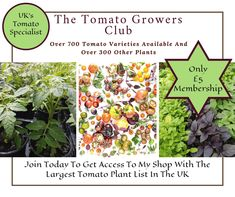 Tomato Growers, Tomato Plants, I Shop, How To Get, Club, Tomatoes