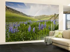 Lupines in Bloom and Rainbow After Rain, Bighorn Mountains, Wyoming, USA Wall Mural – Large